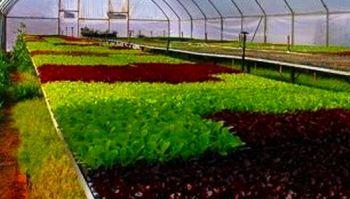 Технологическое решение при выращивании зелени.