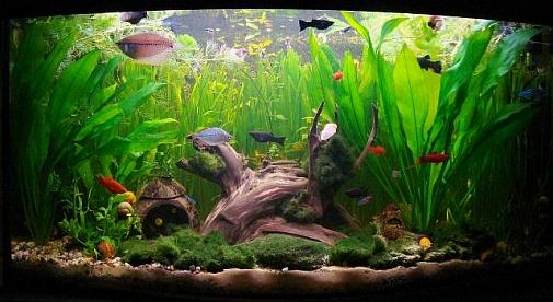 Бизнес выращивание в аквариуме 452