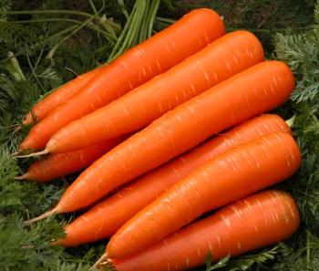 Выращивание моркови.