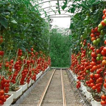 Идеи бизнеса помидорах заработать в интернете за 5 минут 30000 в месяц