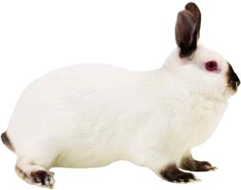 Соблюдайте простые правила в промышленном разведении кроликов.