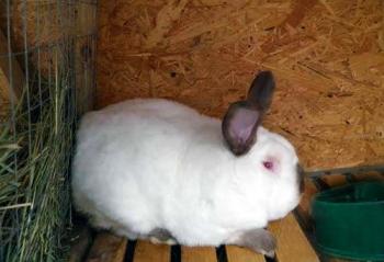 Кормление кроликов в домашних условиях: что должно входить в 77