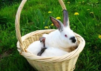 Болезни кроликов в промышленном разведении.