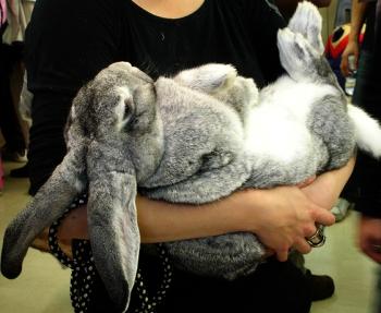 «Промышленное» разведение кроликов / «iВан'ВИЙ Коловрат» / http://abbreviator.ru/