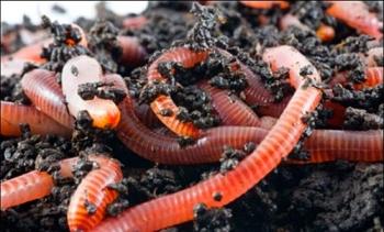 Ферма червей.