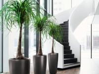vyrashchivanie-palmy