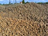 vyrashchivanie-kartofelya