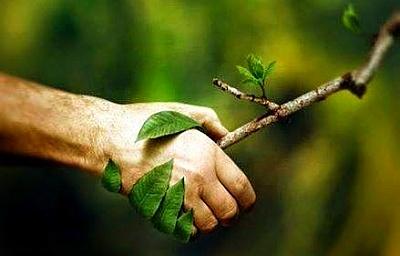 растения не вызывают аллергию.