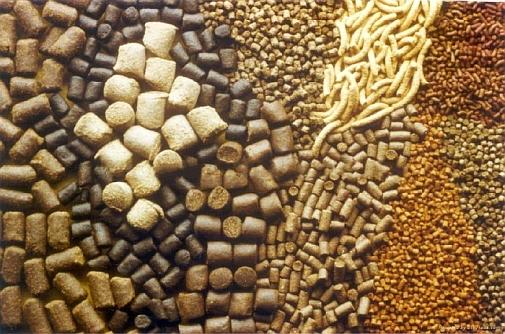 Преимущества и особенности комбикорма для сельскохозяйственных животных
