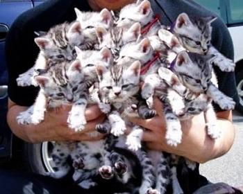 Какую породу кошек выгодно разводить thumbnail