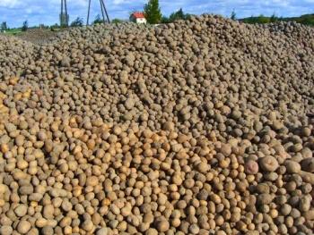 Норма высева картофеля на 1 га в тоннах — Строительный портал №1