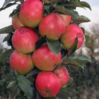 Яблока Валюта.