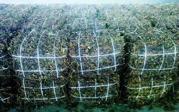 Какие лекарственные растения выгодно выращивать?