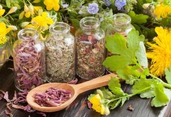 Лекарственные травы продать