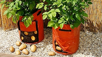 Картошка растет в мешках.